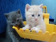 Плюшевые котята!